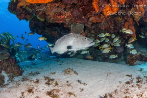Grouper in the cave, Cozumel México by Alejandro Topete