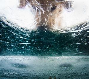 Puppy love by Steven Miller