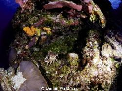 Crab by coral Heads by Daniel Waldman