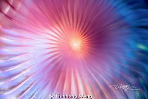 Fireworks by Tianhong Wang
