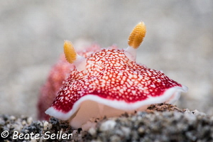 Beauty on the reef by Beate Seiler