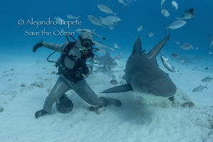 Octavio and the Bull Shark, Playa del Carmen México by Alejandro Topete