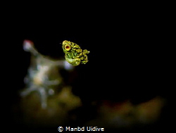 FLY 3P Romblon by Manbd Uidive