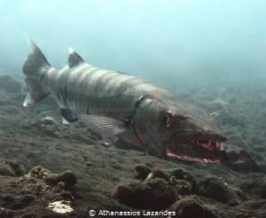 Barracuda at Liberty wreck, Tulamben. by Athanassios Lazarides