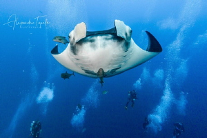 Mantaray in the bubles, Roca Partida México by Alejandro Topete