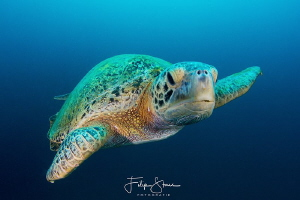 Close encounter, La Paz, Mexico. by Filip Staes
