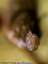 A Little Pacific Bay Pipefish bokeh shot! by Marc Damant