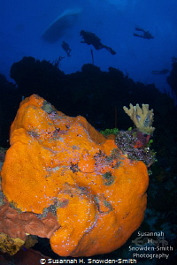 """Divers explore """"Orange Canyon"""", a dive site named for its... by Susannah H. Snowden-Smith"""