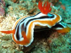 Nudi Branch by Doy Tan