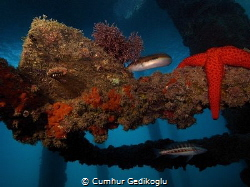 Under the jetty by Cumhur Gedikoglu