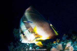 Bathfish by Rudy Janssen