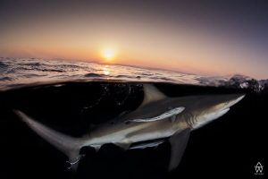 """""""As the light fades...."""" Curoius black tip pops up to th... by Allen Walker"""