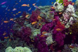 Fijian Reef Scene. Tetion II of the Koro Sea. by Allan Vandeford