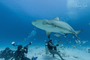 photographer and Bullshark, Playa del carmen México by Alejandro Topete
