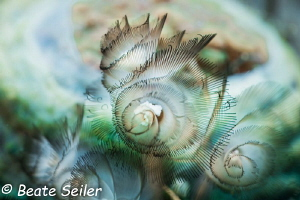 Flowers of the sea by Beate Seiler