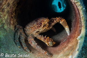 Crab in a tube by Beate Seiler