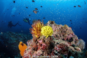 One of my new favourite dive sites: Koh Tachai in Thailand by Marcel Rudolph-Gajda