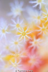 Sunlight by Tianhong Wang
