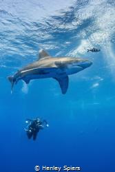 Oceanic Wanderer by Henley Spiers