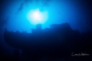 Sea Tiger by Chris Mckenna