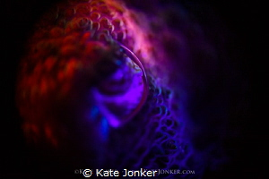 LENS Close up of a cuttlefish using reverse ring macro a... by Kate Jonker