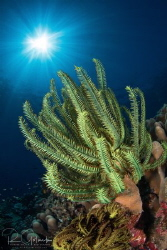 Reef and the equatorial Sun-Weda Bay-Halmahera Island, In... by Richard Goluch