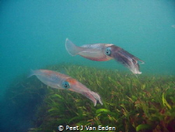 Patrolling. 