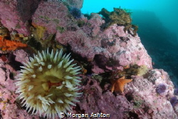 All the Monterey food groups: crab, starfish, anemone and... by Morgan Ashton