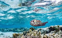 Underwater Wizard by Henley Spiers