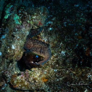 Eel on the Sea Tiger by Chris Mckenna
