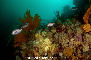 Lush Cape Town Reef - teeming with diverse marine life by Kate Jonker