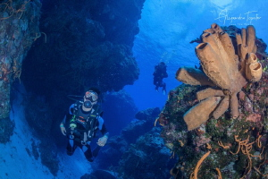 Divers with Reef, Cozumel Mexico by Alejandro Topete