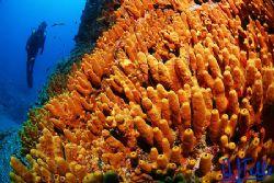 Yellow sponge. Tenerife, Canary Islands, Spain. D200 with... by Arthur Telle Thiemann