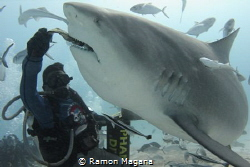 Shark feeding in Playa del Carmen,Mexico by Ramon Magana