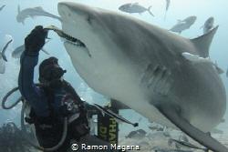 Shark feeding in Playa del Carmen,Mexico by Ramon Magana