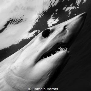 The eye of a legend. mako shark by Romain Barats