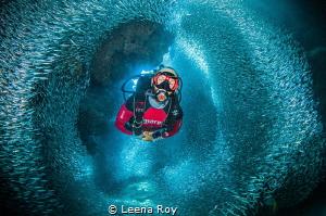 Swimming through silversides by Leena Roy