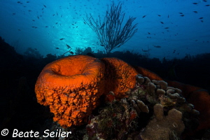 Early morning dive at Torres reef by Beate Seiler