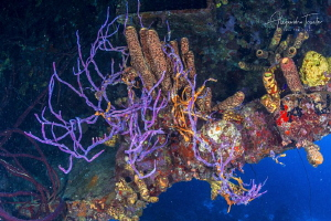 Color in the wreck, Hilma hooker, Bomaire by Alejandro Topete
