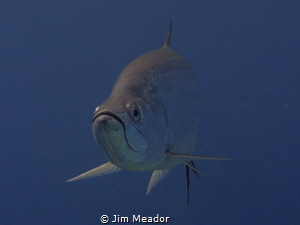 Is this my good side? by Jim Meador