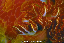 Wild Fire