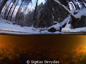 Forest stream in the winter by Sigitas Sirvydas