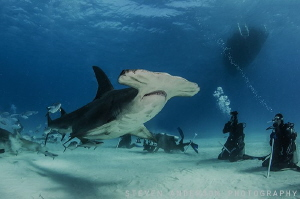 Hammertime!!!! Bimini Undersea really came thru with an e... by Steven Anderson