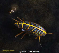Hunchback arthropod and friend by Peet J Van Eeden