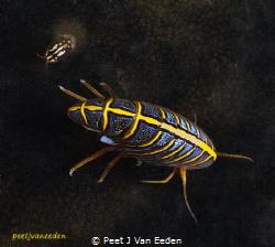 Hunchback arthropod and friend by Peet J Van Eeden