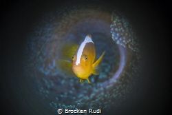 Anemoon fish by Brocken Rudi
