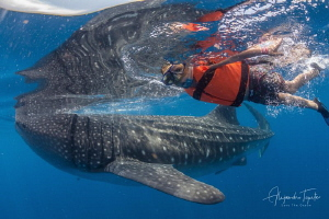Alex and Whaleshark, Ilsa Contoy México by Alejandro Topete