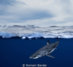 A mako shark (over/under) by Romain Barats