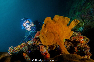 Frogfish with model by Rudy Janssen