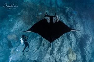 Dafne and Mantaray, Isla Socorro México by Alejandro Topete
